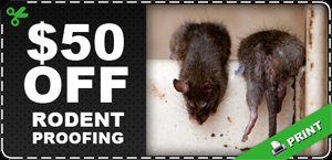 Rodent Proofing   Pro Pacific Rodent Control - Yucaipa, CA
