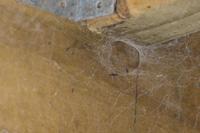 Spider Webs In Corner