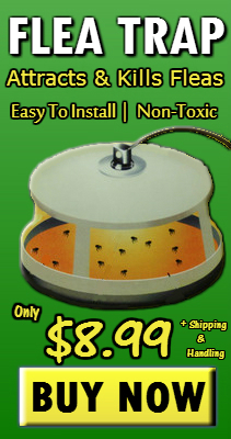 Effective Flea Trap For DIY Pest Control - Get Rid of Fleas In Carpet & Pets