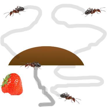 Ant Step 2