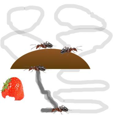 Ant Step 3