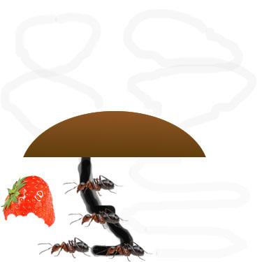 Ant Step 4
