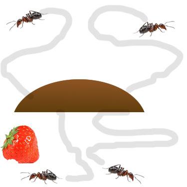 ant step 1