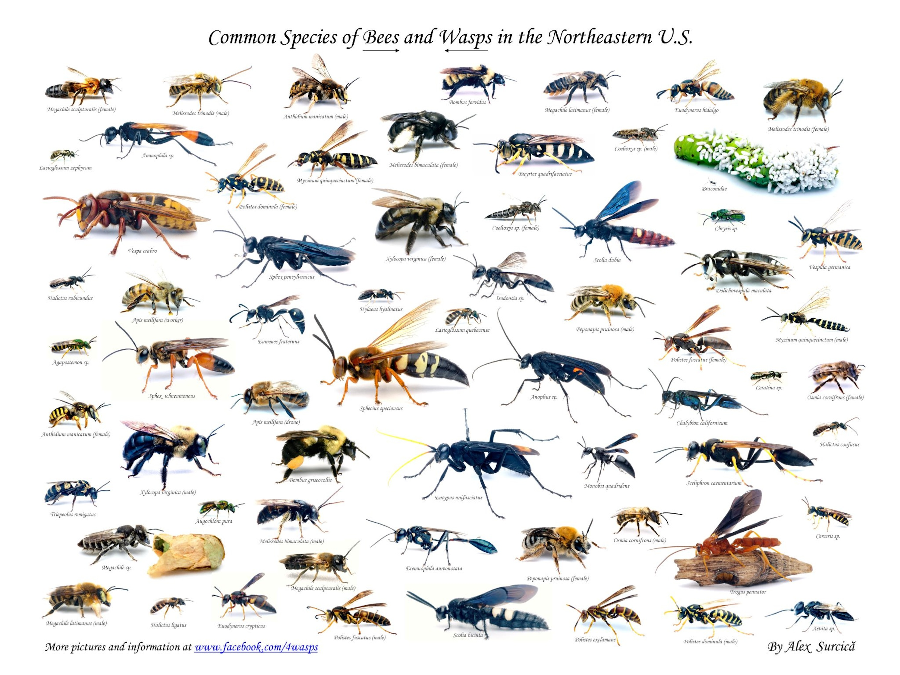 WASP Beasts On The Rampage