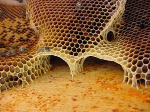 ...up to 400 pounds of honey per year!