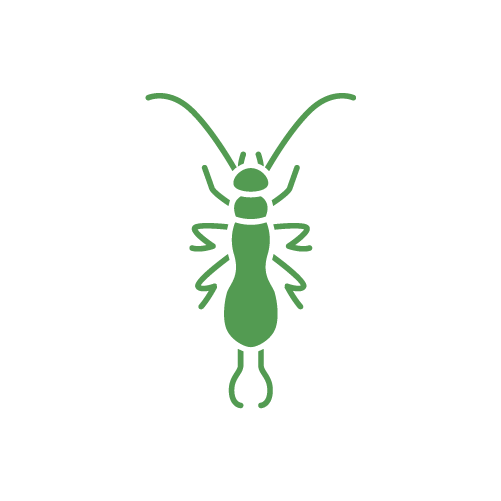 1 Earwig Control San Diego - Get A FREE Inspection Now
