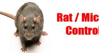 1 Pest Control California - Starting At $1 Per Day!