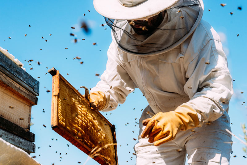 How We Get Rid of Beehives